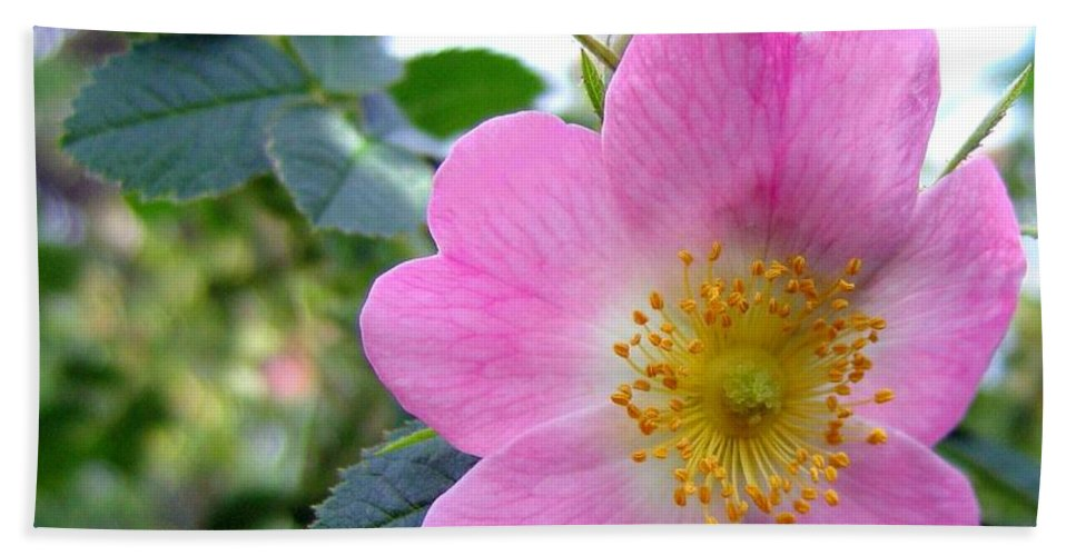 Wild Roses Beach Towel featuring the photograph Wild Roses 2 by Will Borden