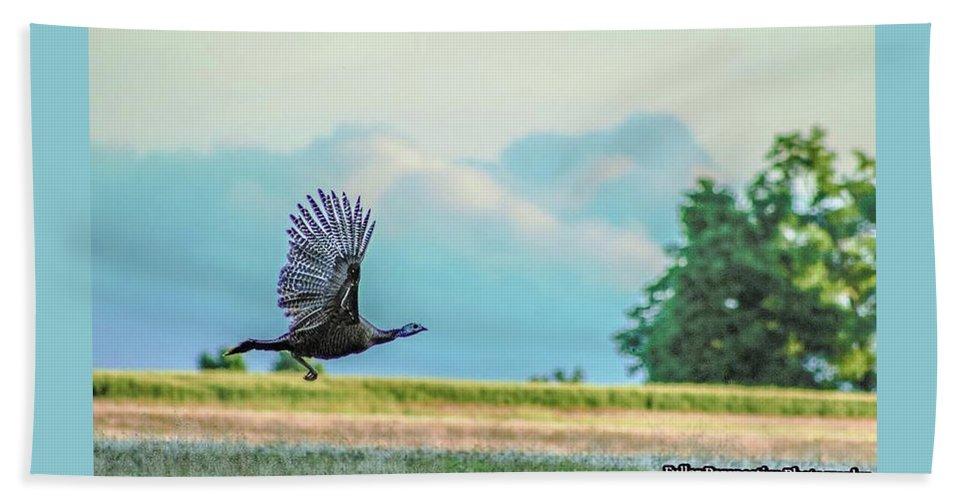 Wild Turkey Beach Towel featuring the photograph Wild Turkey Flight by Chad Fuller
