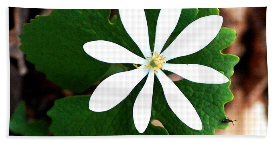 Digital Photo Beach Towel featuring the photograph Wild White by David Lane