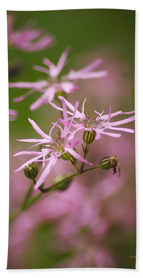 Wildflowers Beach Towel featuring the photograph Wildflowers - Ragged Robin by Christina Rollo