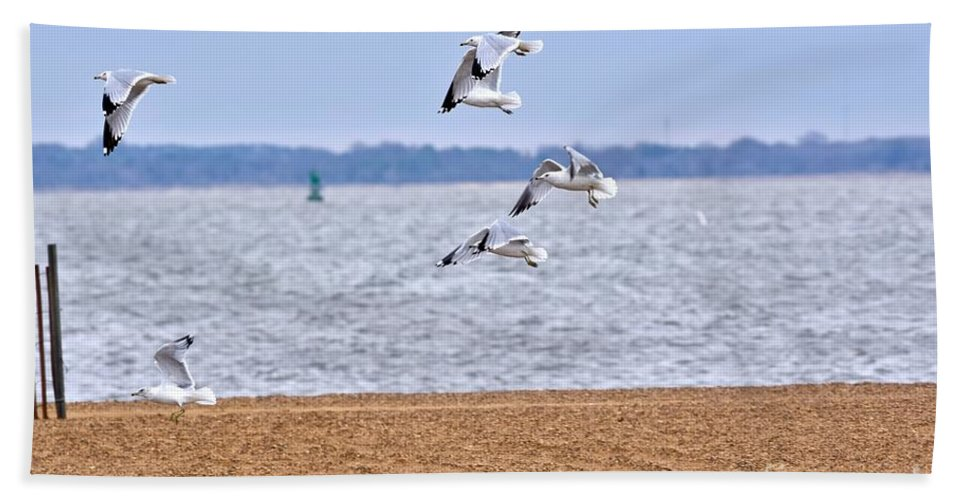 Seagull Beach Towel featuring the photograph Wind Surfing by Jeramey Lende