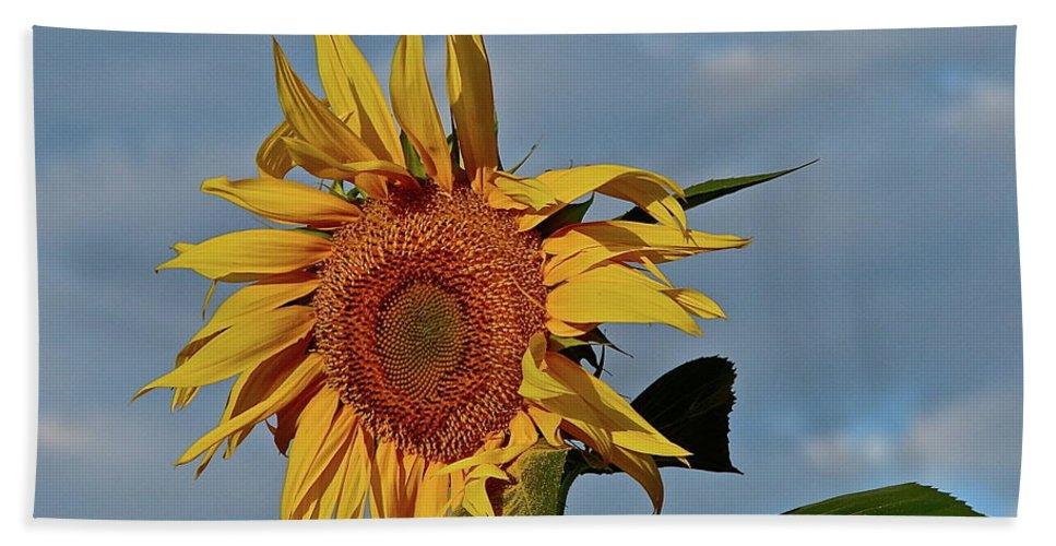 Flower Beach Towel featuring the photograph Windblown by Diana Hatcher