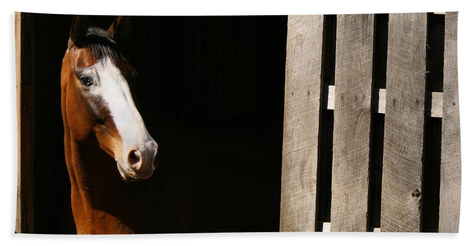 Horse Beach Towel featuring the photograph Window by Angela Rath