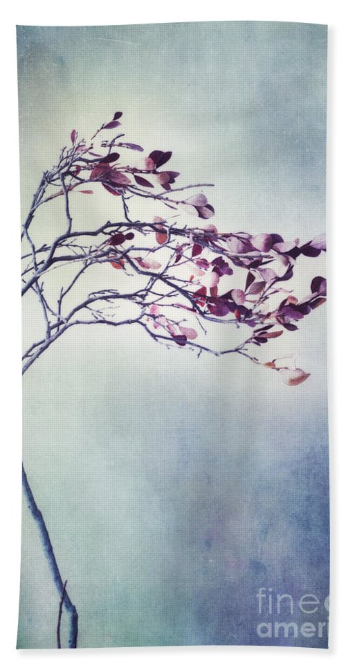 Blueberry Branch Beach Towel featuring the photograph Windswept by Priska Wettstein