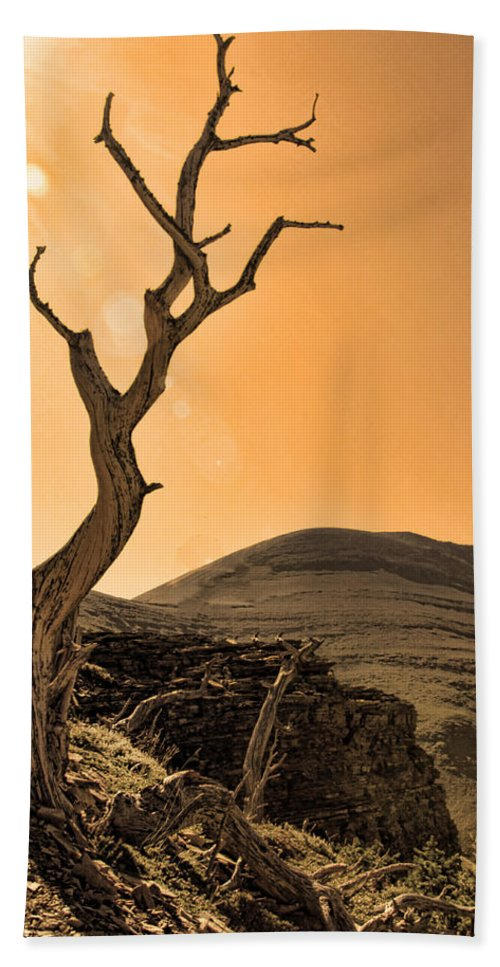 Tree Beach Towel featuring the photograph Windswept by Shari Jardina
