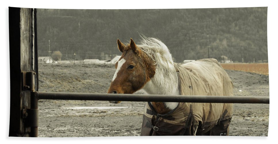 Clay Beach Towel featuring the photograph Windy In Mane by Clayton Bruster