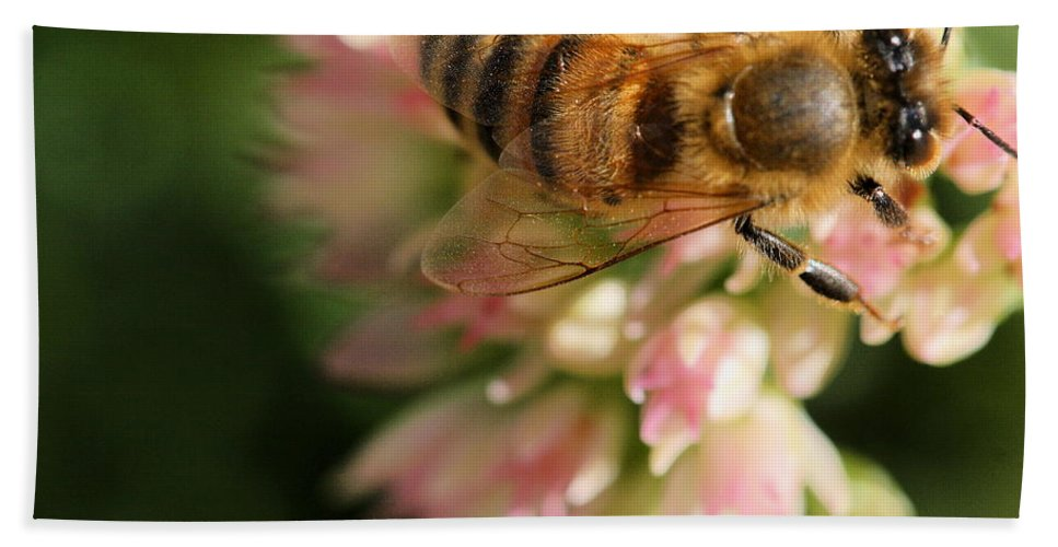 Bee Beach Towel featuring the photograph Wing And A Prayer by Angela Rath