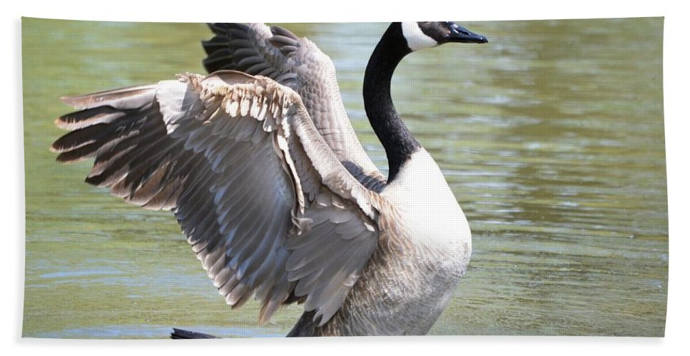 Goose Beach Towel featuring the photograph Wing Flapping by Bonfire Photography