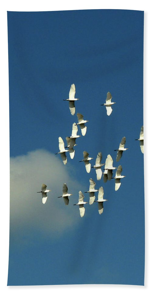 Nature Beach Towel featuring the photograph Wings Of White by Peg Urban