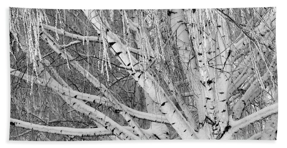 Birch Trees Beach Towel featuring the photograph Icy Winter Birch Tree by Carol Groenen