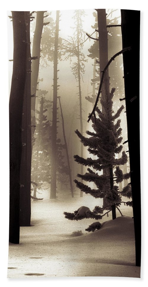 Winter Beach Towel featuring the photograph Winter Forest by Leland D Howard
