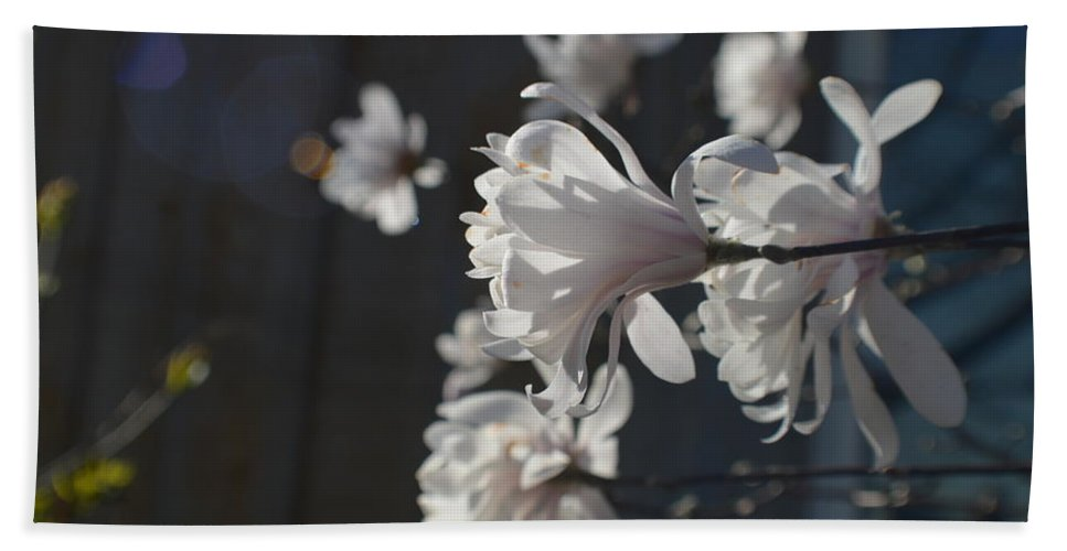 Flower Beach Towel featuring the photograph Wipsy Mini Magnolias by Tina M Wenger
