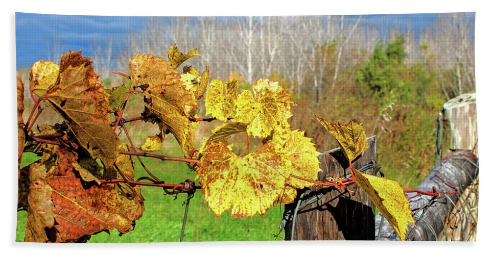 Grape Vine Beach Towel featuring the photograph Withered Grape Vine by Ira Marcus