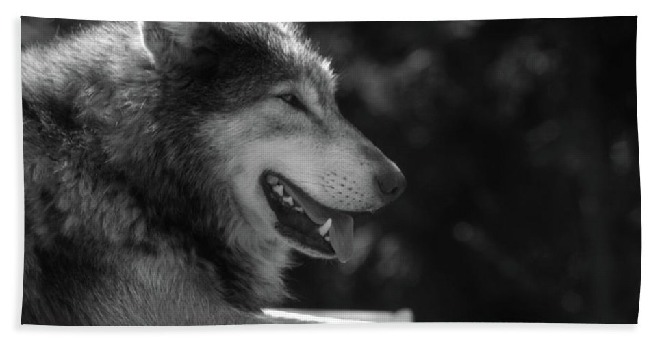 Wolf Beach Towel featuring the photograph Wolfie by Martin Newman