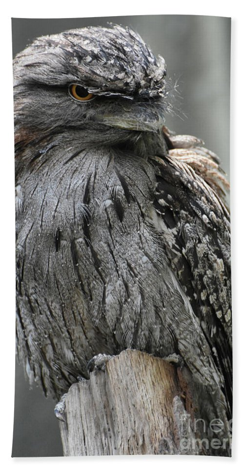 Tawny-frogmouth Beach Towel featuring the photograph Wonderful Patterned Feathers On A Tawny Frogmouth Bird by DejaVu Designs