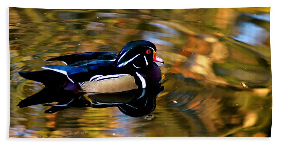 Clay Beach Towel featuring the photograph Wood Duck by Clayton Bruster