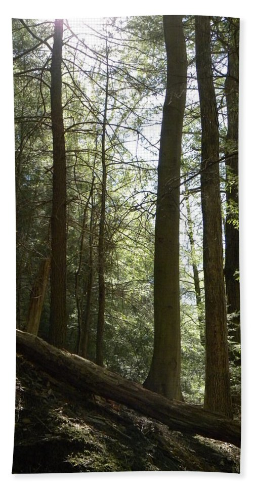 Woods Beach Towel featuring the photograph Wooded Serenity by Kimberly Owens