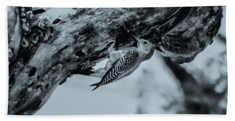 Pajaro Carpintero Beach Towel featuring the photograph Woodpecker - El Salvador by Totto Ponce