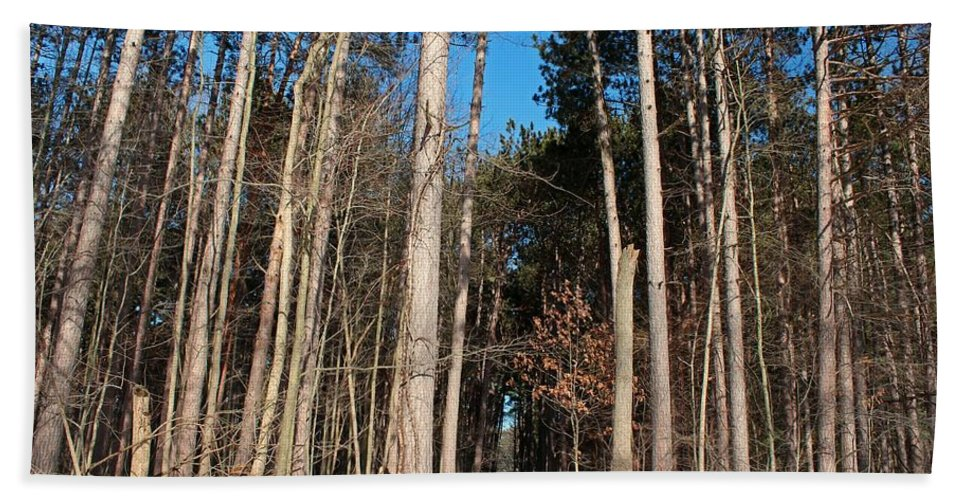 Tree Beach Towel featuring the photograph Woods In Winter by Michiale Schneider