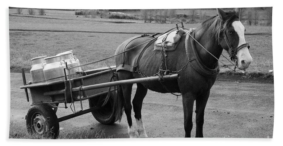 Cart Beach Towel featuring the photograph Work Horse And Cart by Gaspar Avila