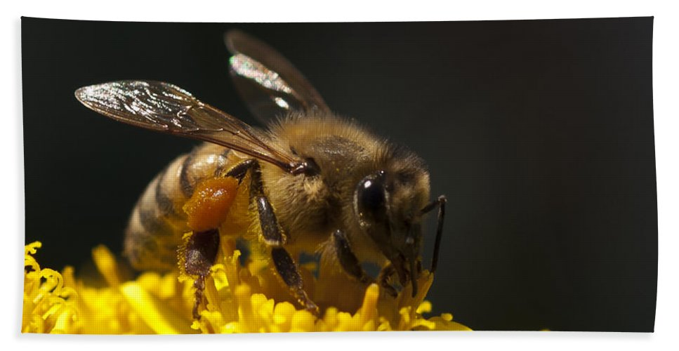 Bee Beach Towel featuring the photograph Working The Flower by Dennis Reagan