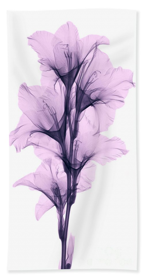 Xray Beach Towel featuring the photograph X-ray Of A Gladiola Flower by Ted Kinsman
