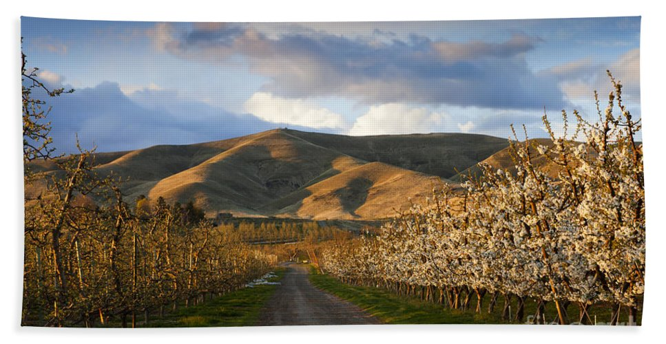 Yakima Valley Beach Towel featuring the photograph Yakima Valley Spring by Mike Dawson