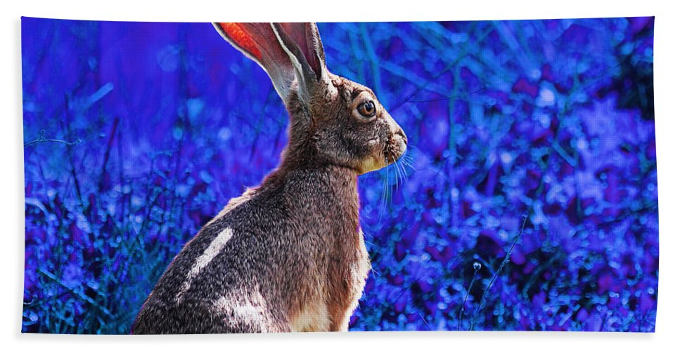 Year Of The Rabbit Beach Towel featuring the photograph Year Of The Rabbit 2011 . Square Blue by Wingsdomain Art and Photography