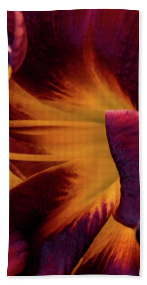 Jay Stockhaus Beach Towel featuring the photograph Yellow And Purple by Jay Stockhaus