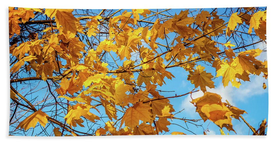 Yellow Autumn Leaves Beach Towel featuring the photograph Yellow Autumn Leaves 2 by Lilia D