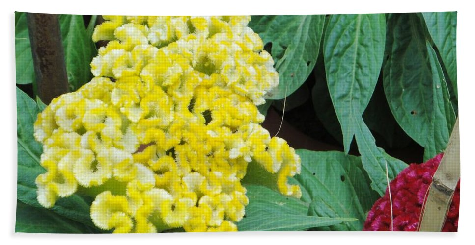 Beach Towel featuring the photograph Yellow Cockscomb by Usha Shantharam