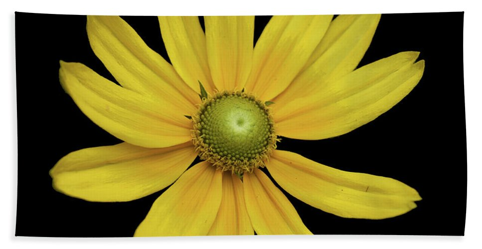 Daisy Yellow Green Eye Green Asteraceae African Daisy Flower Pollen Beach Towel featuring the photograph Yellow Eyed Daisy In Black by Sally Sperry