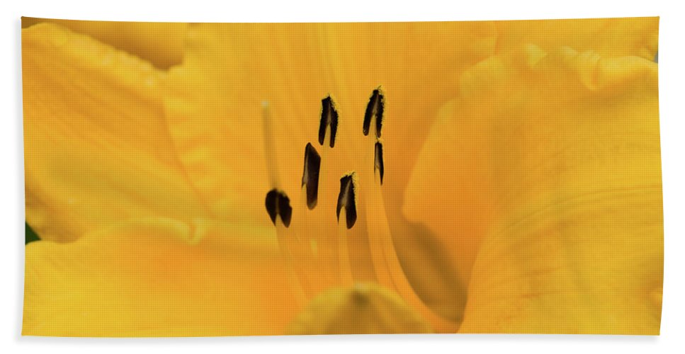 Lily Beach Towel featuring the photograph Yellow Lily by Betty LaRue