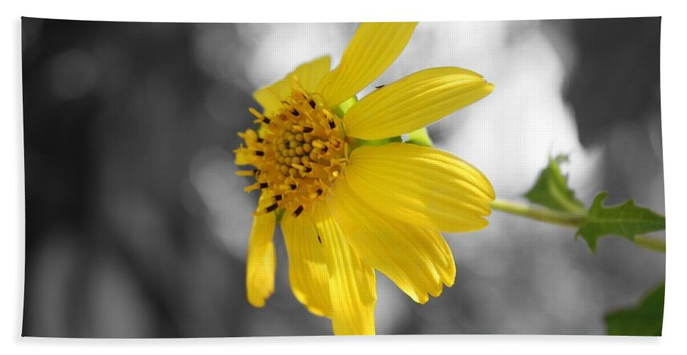 Yellow Flower Beach Towel featuring the photograph Yellow by Mandy Shupp