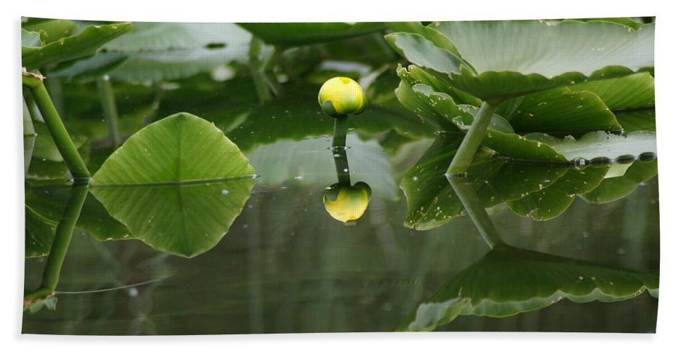 Nature Beach Towel featuring the photograph Yellow Pond Lily by Ben Upham III