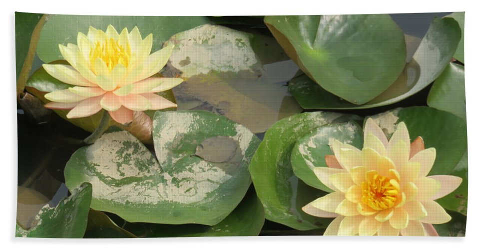 Flowers Beach Towel featuring the photograph Yellow Water Lillies by Mikhael van Aken