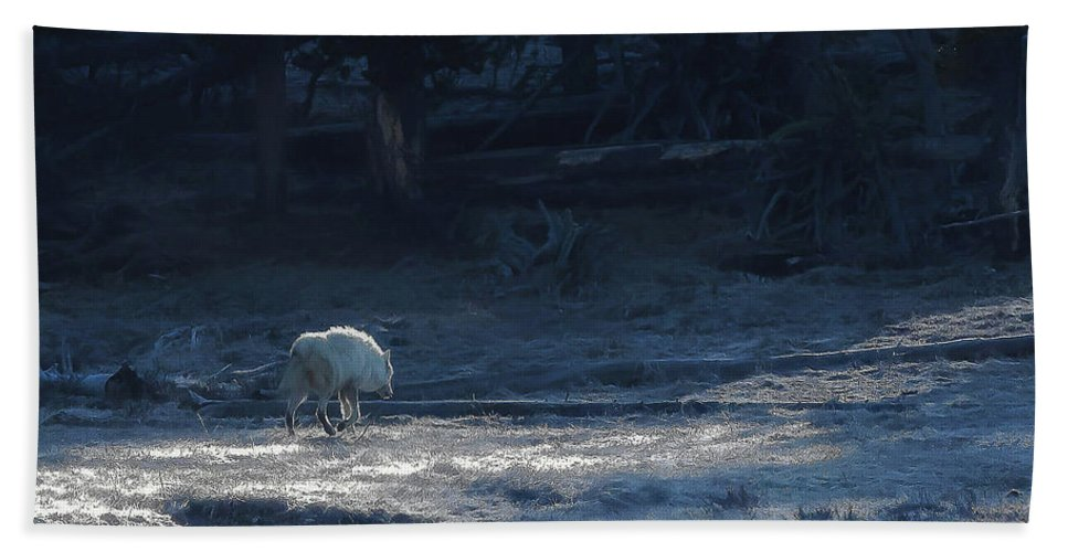 Canyon Pack Beach Towel featuring the photograph Yellowstone White Lady Unsigned by Steven Clevidence