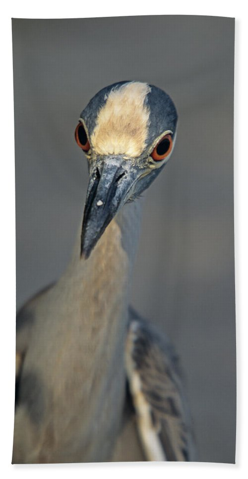 Animal Beach Towel featuring the photograph Yes Can I Help by John Harmon
