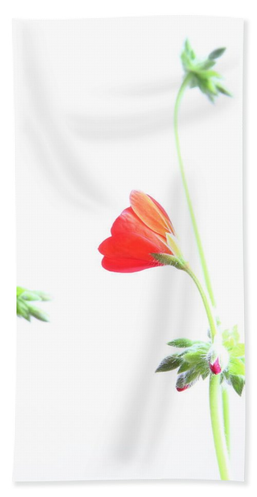 Geranium Beach Towel featuring the photograph Young Geranium Fine Art Photography Print by James BO Insogna