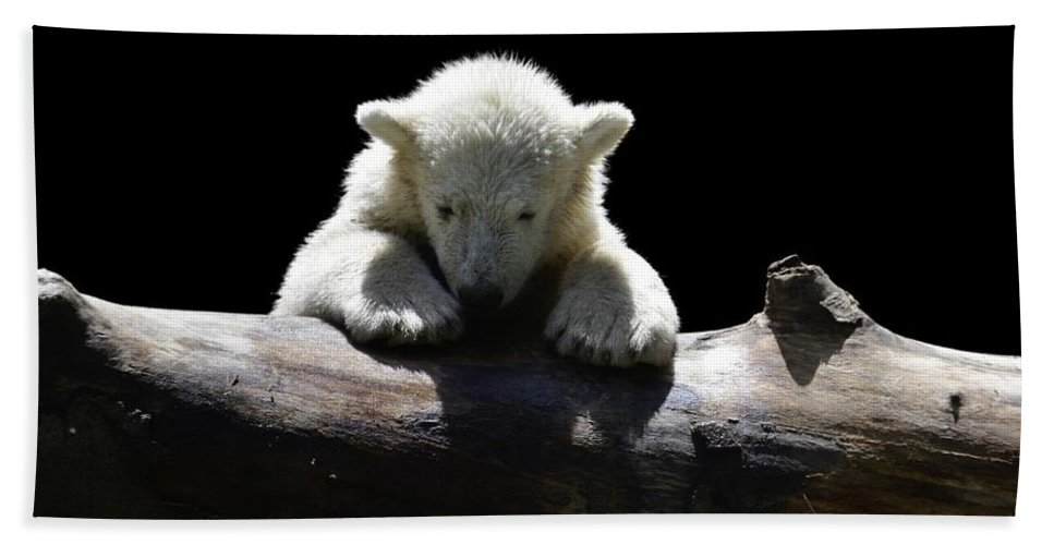 Bear Beach Towel featuring the photograph Young Polar Bear On A Log by FL collection