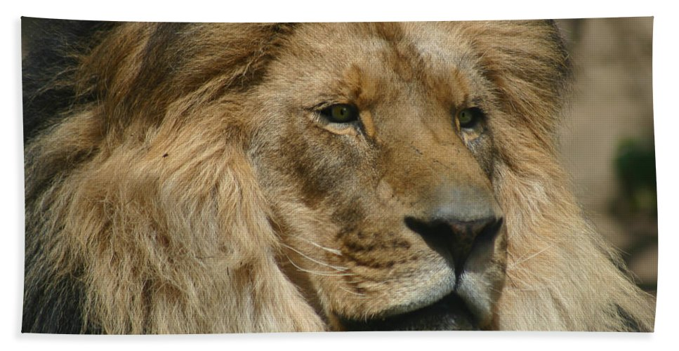 Lion Beach Towel featuring the photograph Your Majesty by Anthony Jones