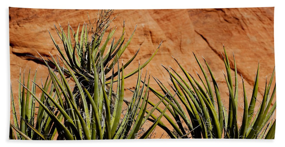 Yucca Plant Beach Towel featuring the photograph Yucca Family by Kelley King