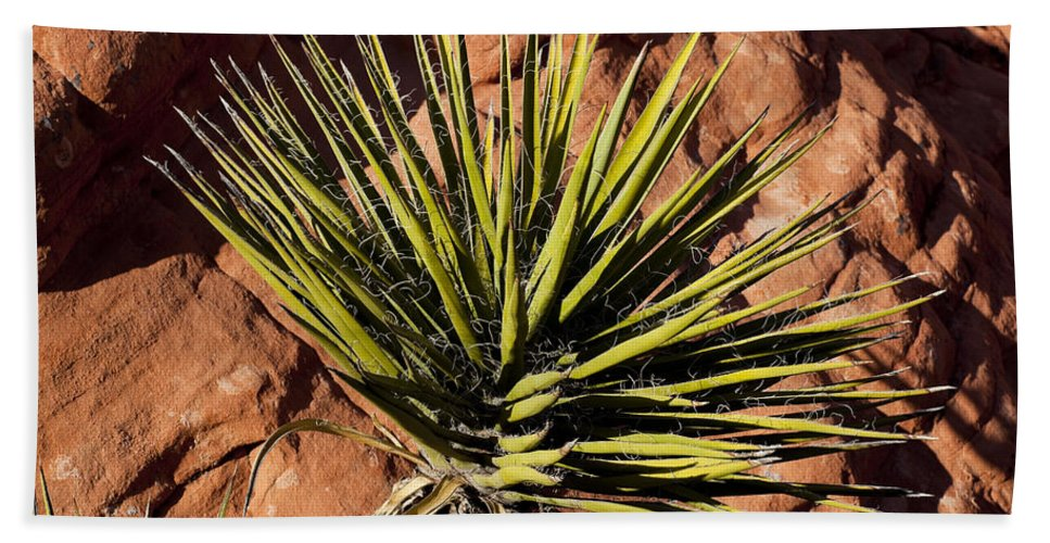 Yucca Plant Beach Towel featuring the photograph Yucca Five by Kelley King