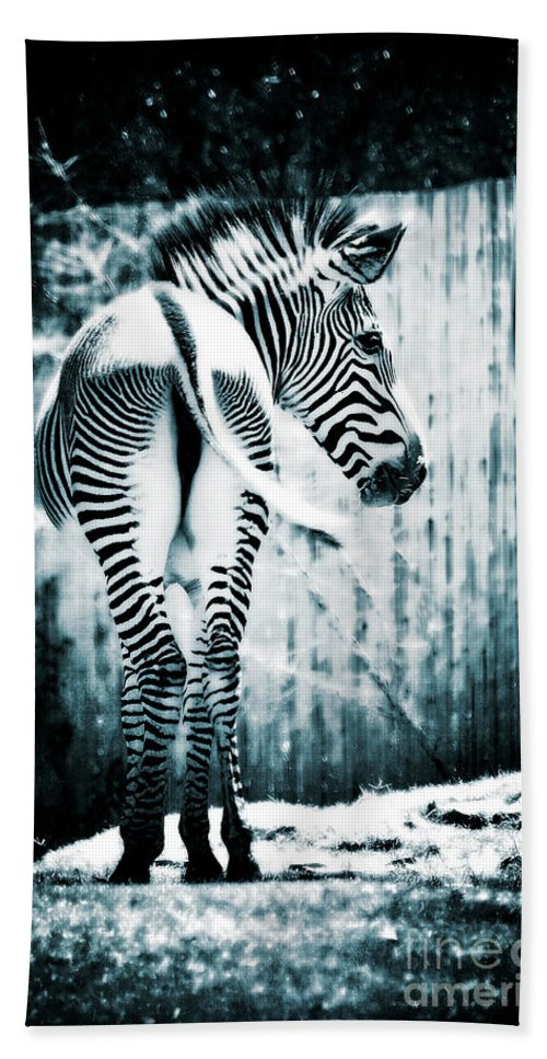 Zebra Beach Towel featuring the photograph Zebra Blues by Saija Lehtonen