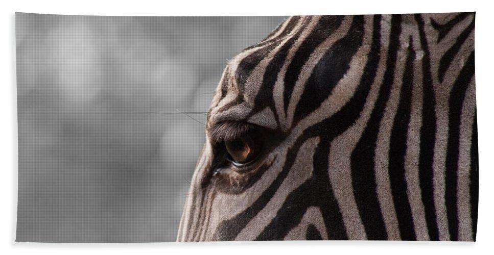 Horse Beach Towel featuring the photograph Zebra I by Svetlana Ledneva-Schukina