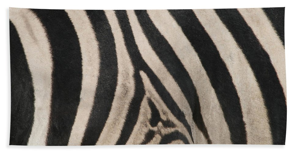 Zebra Beach Towel featuring the photograph Zebra Stripes by Bruce J Robinson