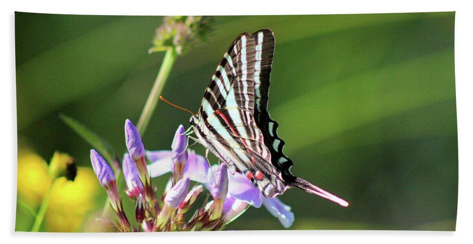 Zebra Beach Towel featuring the photograph Zebra Swallowtail Butterfly On Phlox by Karen Adams
