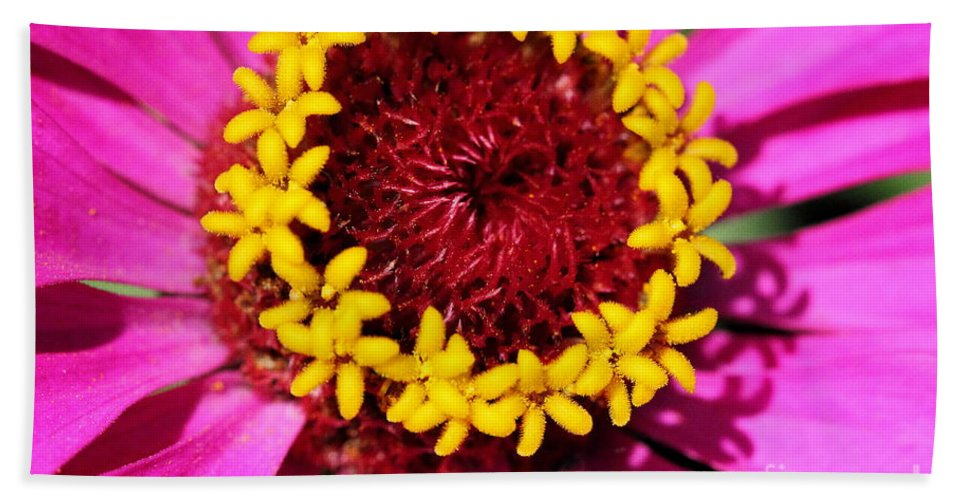 Pink Beach Towel featuring the photograph Zinnia Macro by Angela Rath