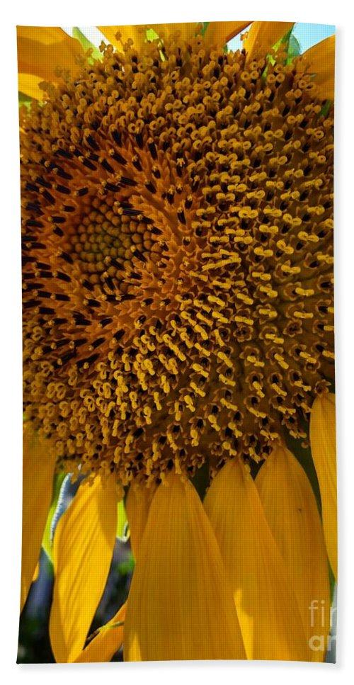 Sunflower Beach Sheet featuring the photograph Sunflower In The Sun by Melissa OGara