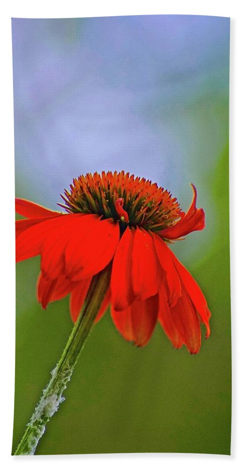 Lone Flower In Field Beach Towel featuring the photograph Flower by Gillis Cone